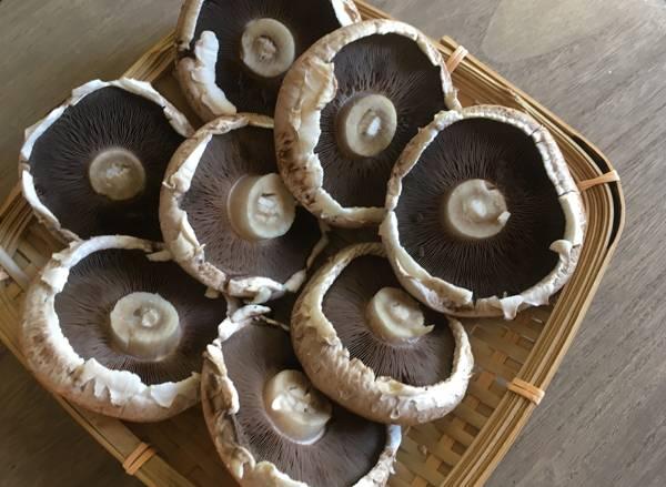 funghi portobello